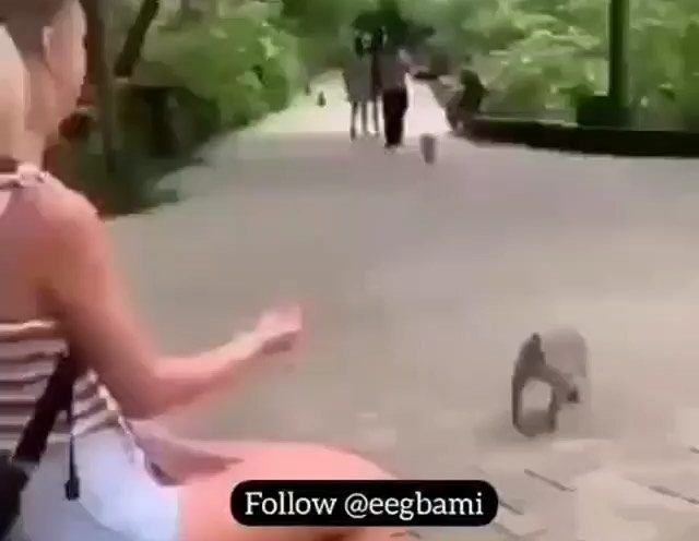 What's Up Emilia & What Have You Gat For Me - Hilarious Monkey Video